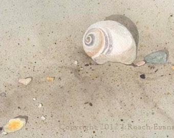 Moon Snail Matted Print