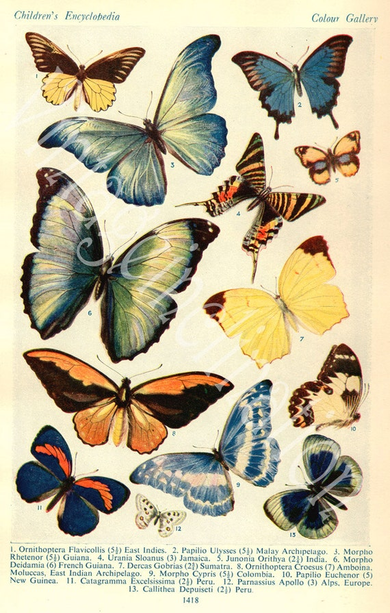 1933 Butterfly Prints, Vintage Antique Book Plate prints, FOREIGN BUTTERFLIES plates1 and 2, butterflies nature art illustrations