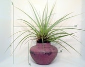 Air Plant HOLDER Textured clay Purple Planter Pot NO PLANTS