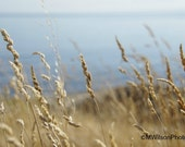 Ocean Landscape Photograph, wild grasses photo,Vancouver Island shoreline photography, West Coast seashore, ocean wall decor,sea view image