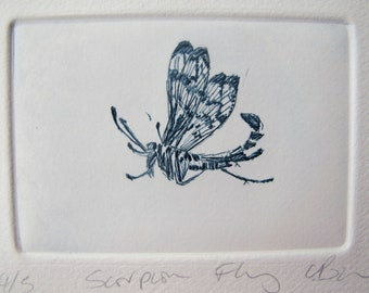 Cute Bug Drypoint. Small Scorpion Fly. Hand printed on an etching press.