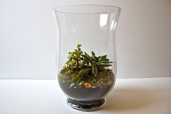 Succulent Terrarium in Vintage Glass Vase