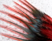 Black and Red Feathers for Crafts Feathers, Qty14