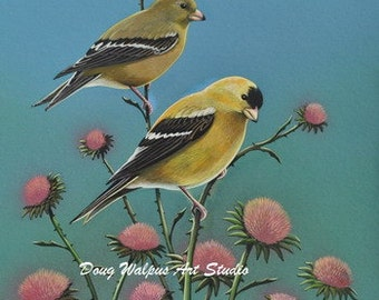 Gold Finch Bird Print, Songbirds, Gold finches and Thistles, Wall Decor, Home Decor, Gifts, Office Decor, Bedroom Decor, Animal Wildlife