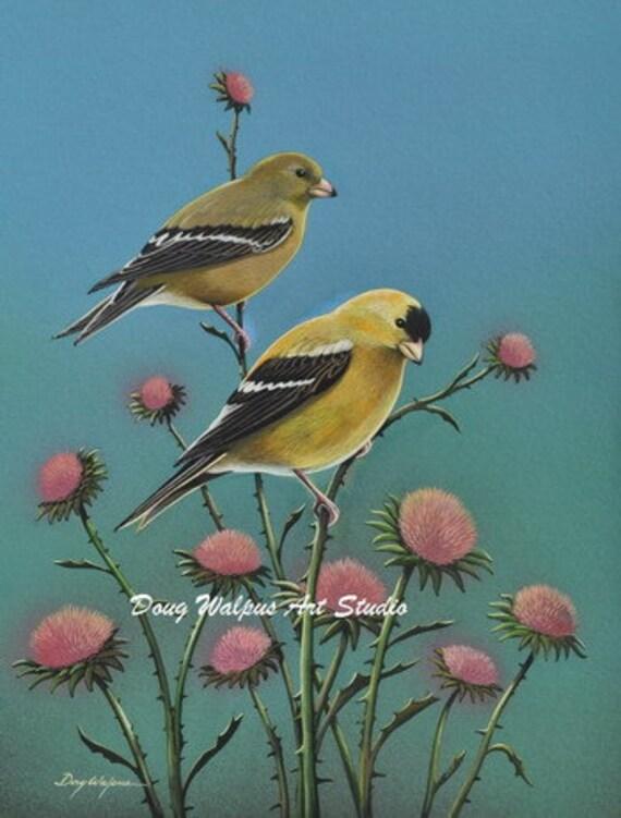 Gold Finches on Thistle, Bird Print, Wildlife Art, Songbird, Nature, Wall Decor