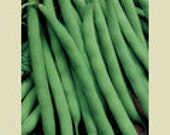 Bean - Blue Lake Bush - Heirloom - 30 Seeds - Great for canning