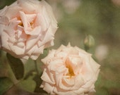 Rose Photograph, Pink Flower Photo, Peach Wall Art, Garden Photography, Green Shabby Chic Decor, Bedroom Picture