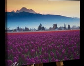 Skagit Valley Tulip with Mt Baker at Sunrise - photo on canvas with a gallery wrap