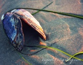 mussel shell sand sunset glow seaweed - 8 x 10 photography print