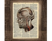 Where Is My Mind Vintage Skull Anatomy Print on an Antique Upcycled Bookpage