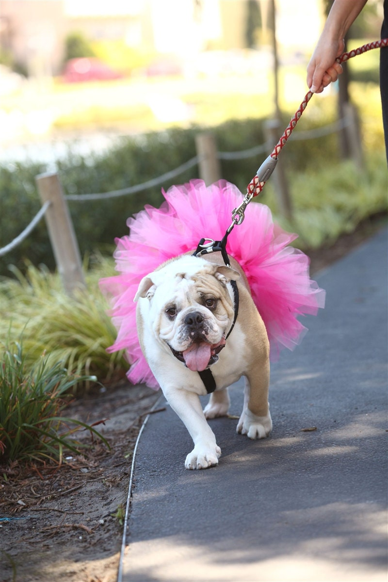 Hot Pink Dog Tutu - photo#28