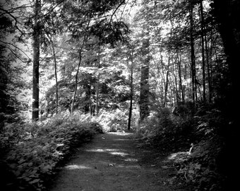 Fine Art Photograph of The Path Through Root Glen Nature Photograph