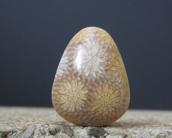 Indonesian Fossil Coral Cabochon, Semiprecious stone, Jewelry making Supplies S1571