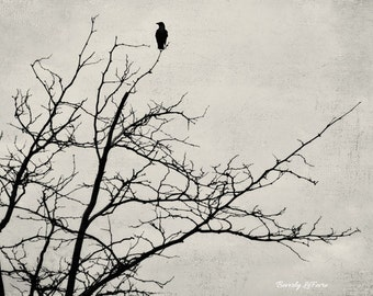 alone, nature, fine art photography