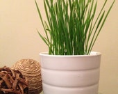 Grow Your Own Wheat Grass Kit