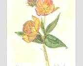 HELLEBORES 1 -  Original Watercolor Painting by Jamie Dauch a Michigan artist - Lenten Rose Home and Garden decor
