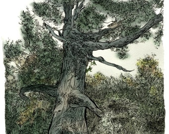 Illustration print of Sherwood forest, Nottinghamshire, UK.