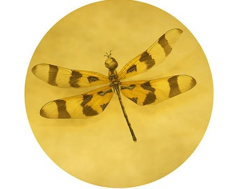 Nature Photography, Dragonfly Fine Art Photograph, Yellow Brown Insect Still Life, Mandala Photograph, Circle Art Print