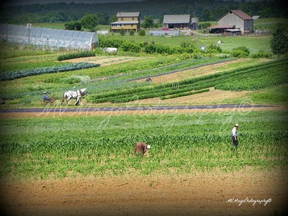 Amish Farm Print / Primative Farm Print / Tennessee Farm Print / Tennessee Landscape Print / Free US Shipping