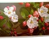 Apple Blossoms, Botanical, Post Card 1940s THOR E. GYGER Floral Series Linen Postcard