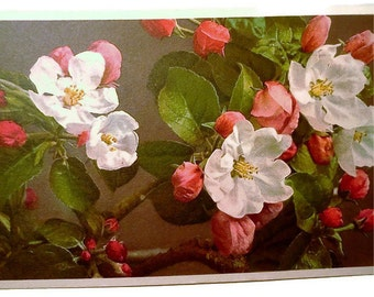 Apple Blossoms, Botanical, Post Card 1940s THOR E. GYGER Floral Series Linen Postcard