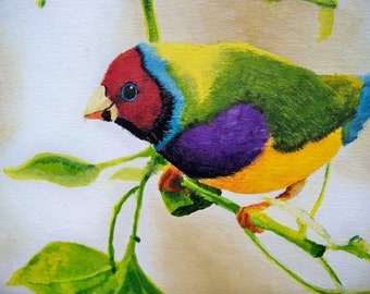 Gouldian Finch Painting Print FREE SHIPPING