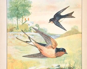 Vintage Swallow Print