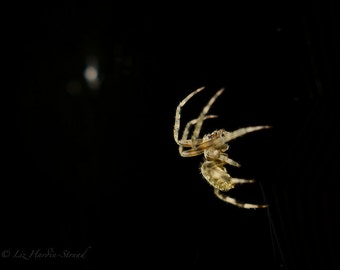 Awesome Spider Photo Fine Art Print 8x10 Spider Pictue Spider Art