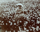 Antique stereowiew. girl picking daisies. C. 1910
