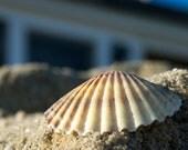 8.5x11 Photograph-Sea Shell in Cape Cod