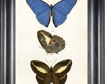 BUTTERFLY PRINT D'Orbigny 8x10 Botanical Art Print 9 Beautiful Antique French Blue Butterflies Natural History Garden Nature Illustration