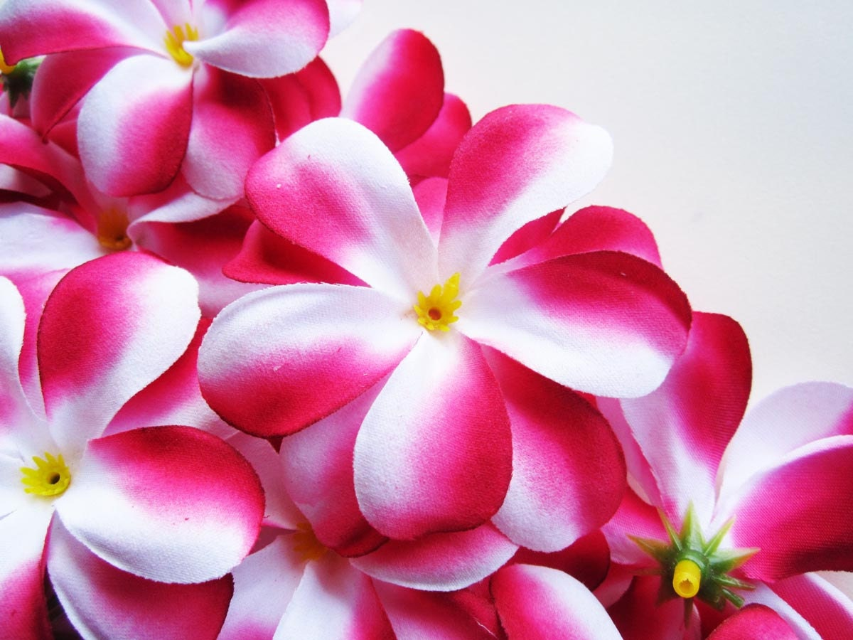 how to make frangipani perfume