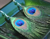 Peacock Earrings, Feather Earrings, Vibrant, Colorful Peacock Feathers
