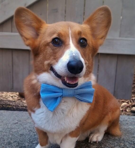 CLEARANCE - light blue herringbone slip-on bow tie for dogs