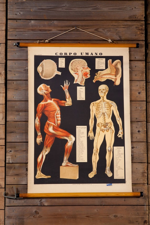 Vintage Anatomical School Chart