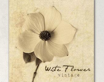 ETSY BANNER  Vintage Sepia White Flower