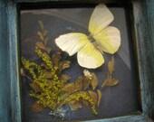 Vintage Enesco Butterfly Diorama Shadowbox