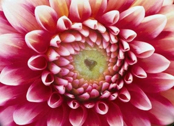 Dahlia Unwins Mix Flower Seeds, Perfect for Dried Flowers, 20 Seeds