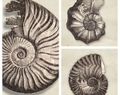 SET of Fossil sea shell Print Vintage Image Natural History