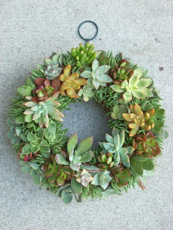 Succulent Wreath 11 Inch Diameter From Succulentsalon On