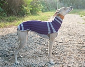 Sporty Italian Greyhound Sweater / Jumper / Whippet