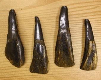 QTY 50 Antiqued Buffalo Teeth