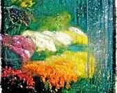Flowers Rainbow Ice Winter NYC Nature - Fine Art Hipstamatic Photograph