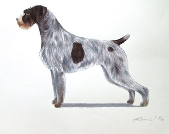 German Wire Haired Pointer Dog - Archival Fine Art Print - AKC Best in