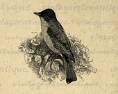 Phoebe Bird Antique Image Digital Download Printable Graphic for Transfers Tote Bags Tea Towels etc HQ 300dpi No.1007