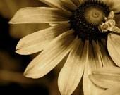 Bee Still: Color Me Colorado for 303