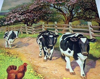 Farm Cows Docile Black and White Walking on Trail Titled Blossom Time Vintage Lithograph Calendar Print Blooming Trees Home Decor Picture