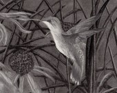 Hummingbird 9x12 Rag Photographique Print of Original Graphite/Charcoal Drawing