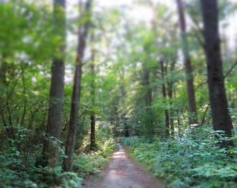 Path to Wonderland