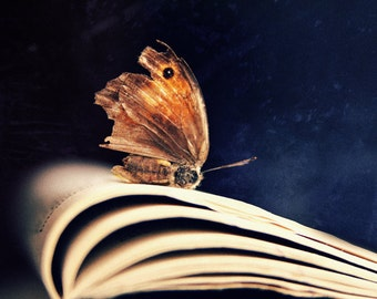 Butterfly Fine Art Photography Conceptual Still Life Photography Navy Blue Brown Wall art color Nature art Shabby chic Creative fine prints